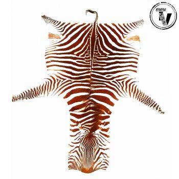 Genuine Zebra Skin Rug
